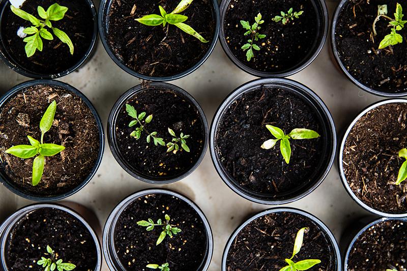 Survival Gardening Tips: Enhance Disaster Preparedness